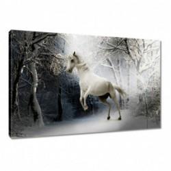 Obraz 60x40cm Biały rumak