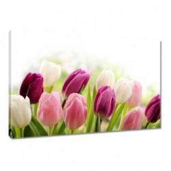Obraz 60x40cm Piękne tulipany