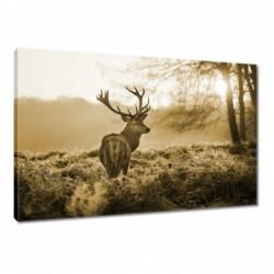 Obraz 60x40cm Jeleń w lesie