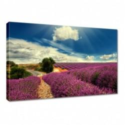 Obraz 60x40cm Lawendowy pejzaż